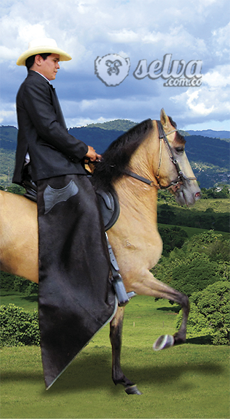 selva, caballo