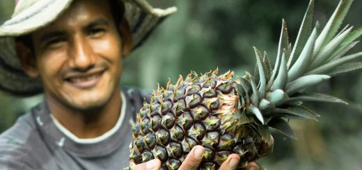 Cultivo de piña, vereda las Doradas. Finca Paraíso Amazónico. Trabajador Jorge Eliecer Álvarez. Fotográfía: KamiloArdila
