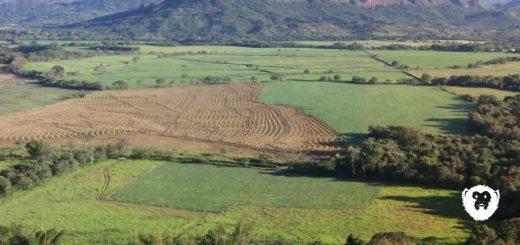 Paro de arroceros en el Huila afectaría al Caquetá