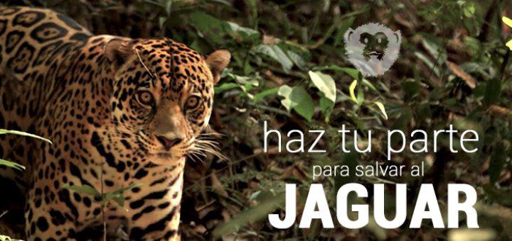 Un tigre prende las alarmas en vereda del Caquetá