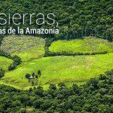 Motosierras, asesinas de la Amazonía
