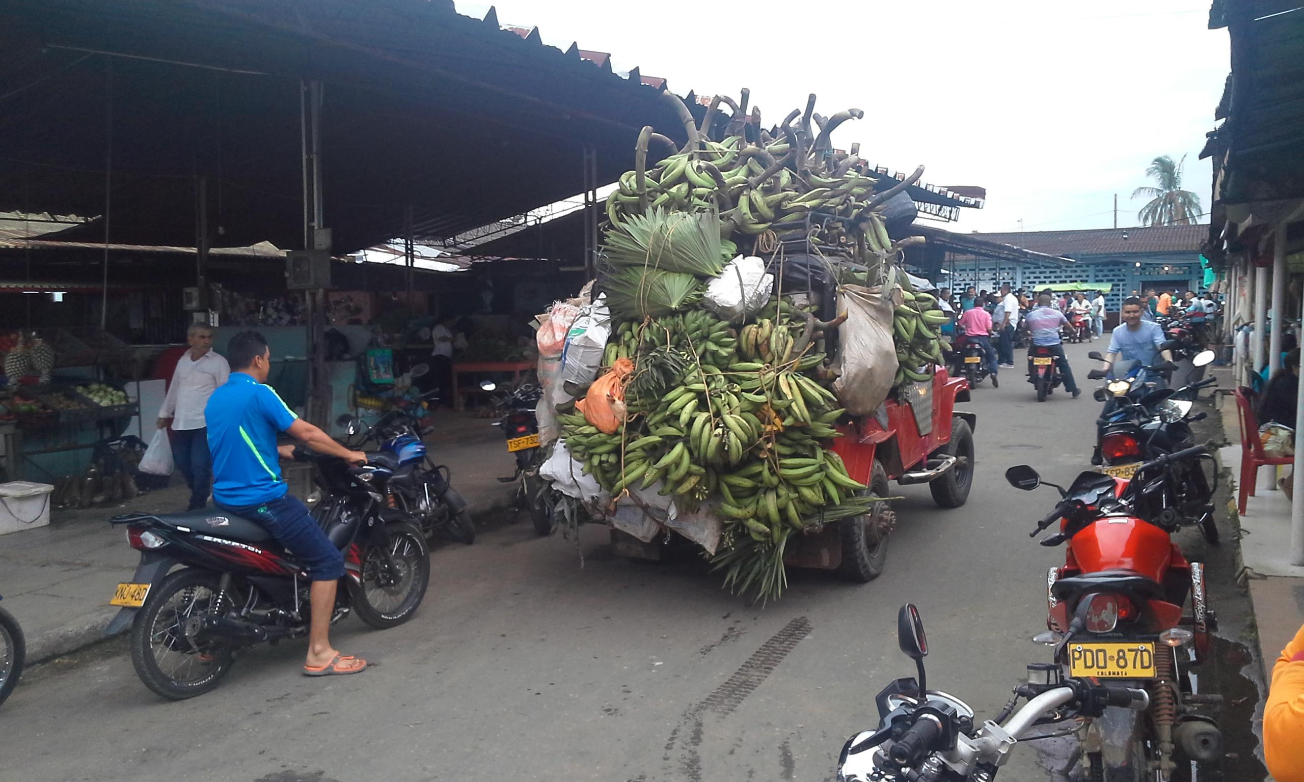 el plátano, una riqueza del municipio. Foto Edilberto Valencia