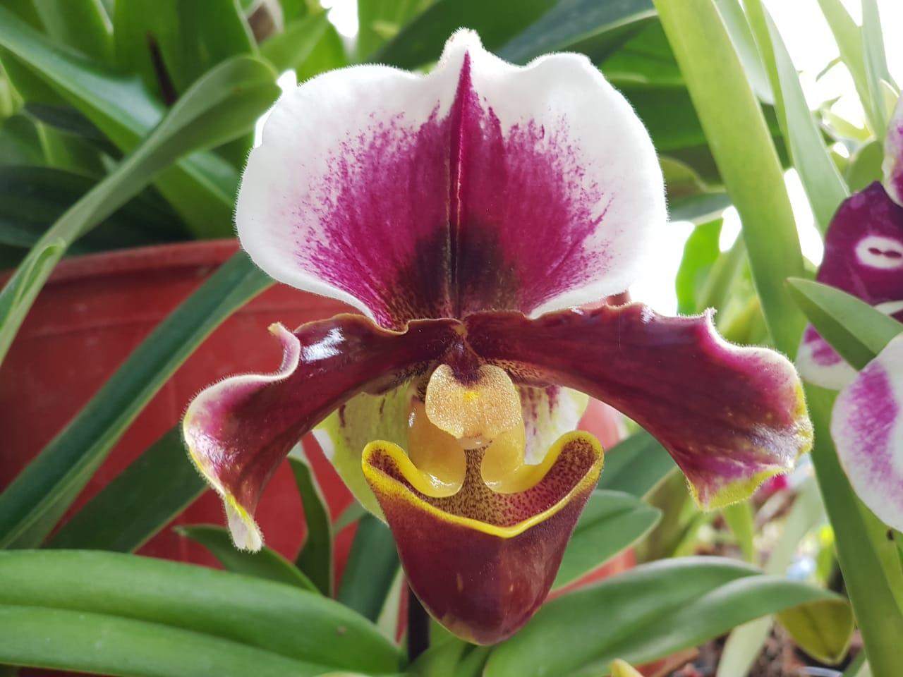 Los dioses del parnaso de la Amazonía sembraron su magia en las flores del Caquetá