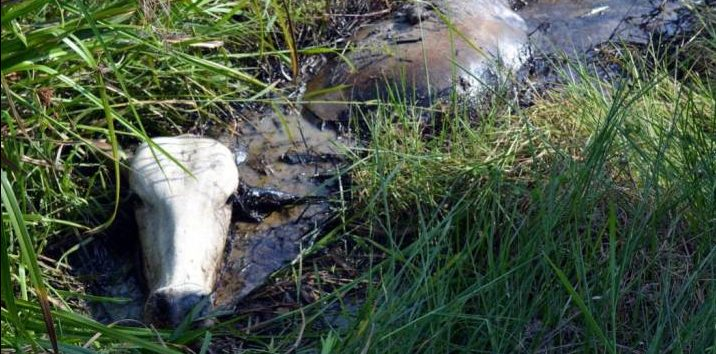 Accidente con diluyente de crudo afecta gravemente finca en Puerto Rico