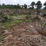 Destruyen humedal en parque natural de Belén
